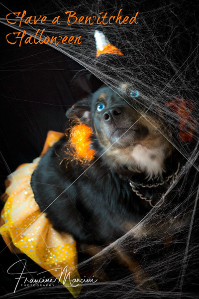 2018   Halloween_101.jpg