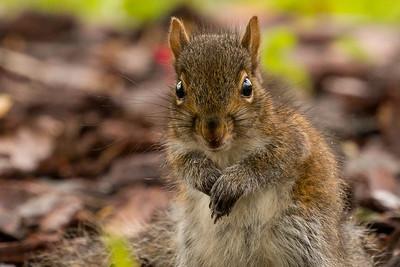 2021 04 Squirrels