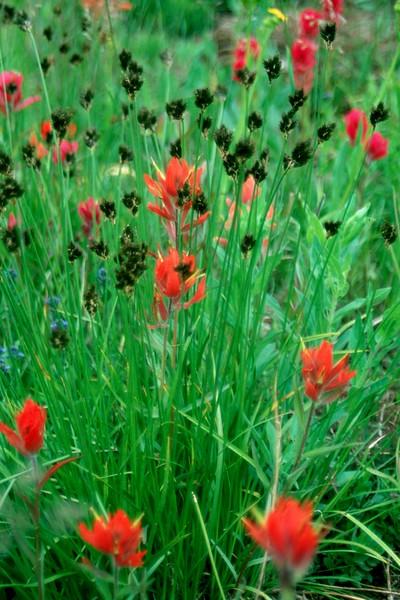 amh FLOWERS (1289).jpg