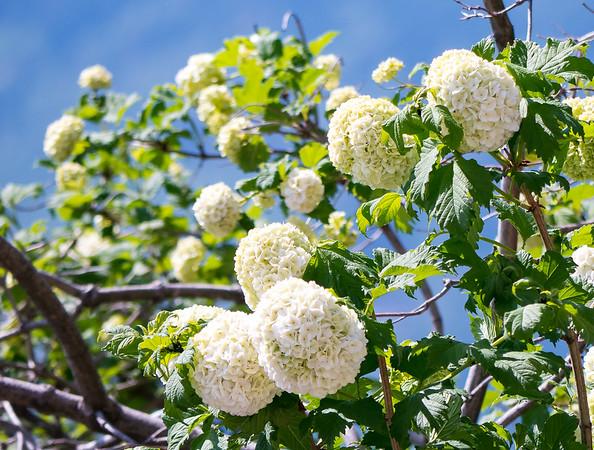 Flowers, Nature, Landscapes