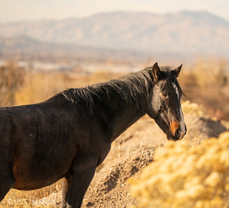Mountains 2020 Wild Horses