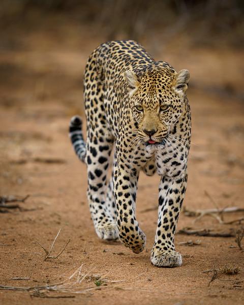 LeopardHills-20191029-1663.jpg