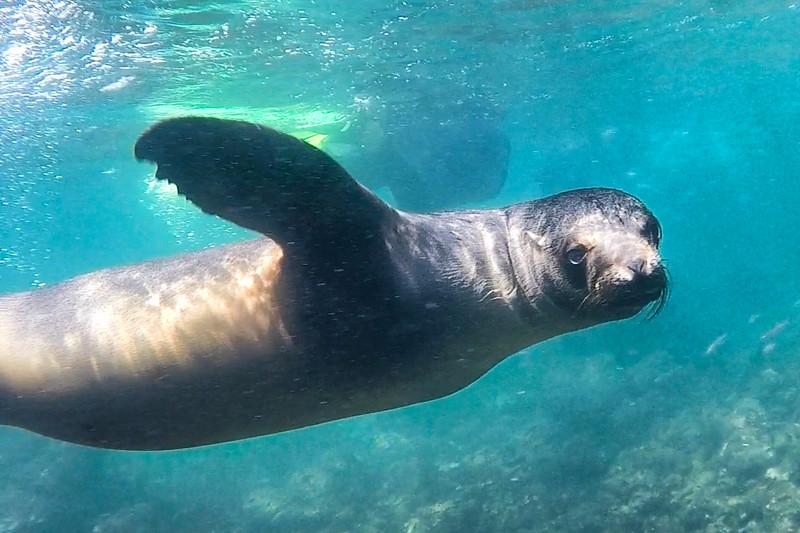 Sea Lion 2-2.jpg