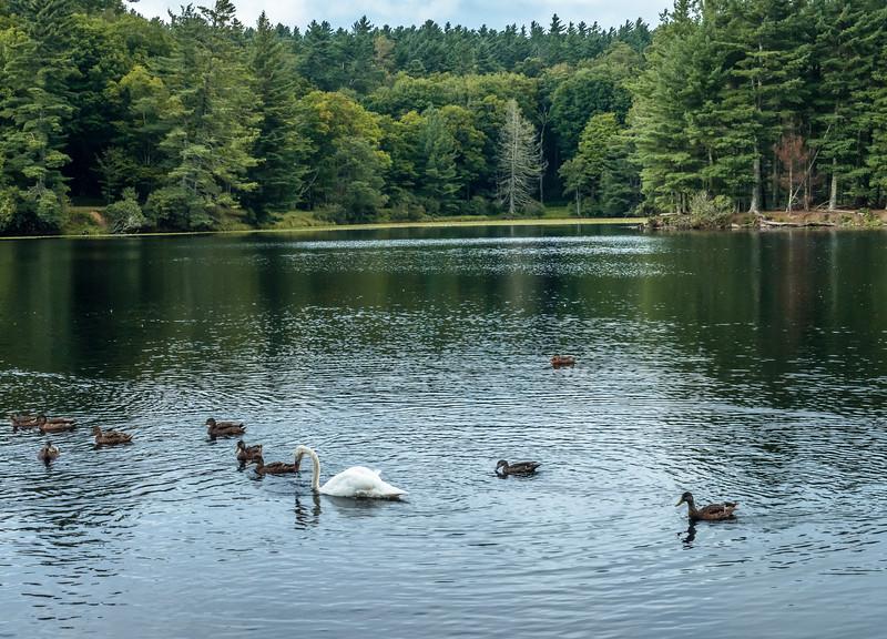 47 Aug 19 Swan iii -1.jpg