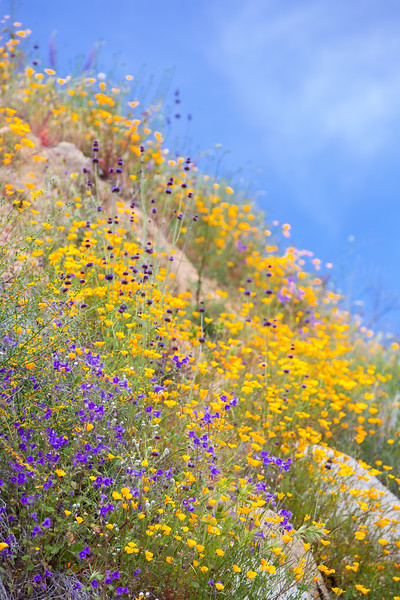 Spring Flowers B-48.jpg