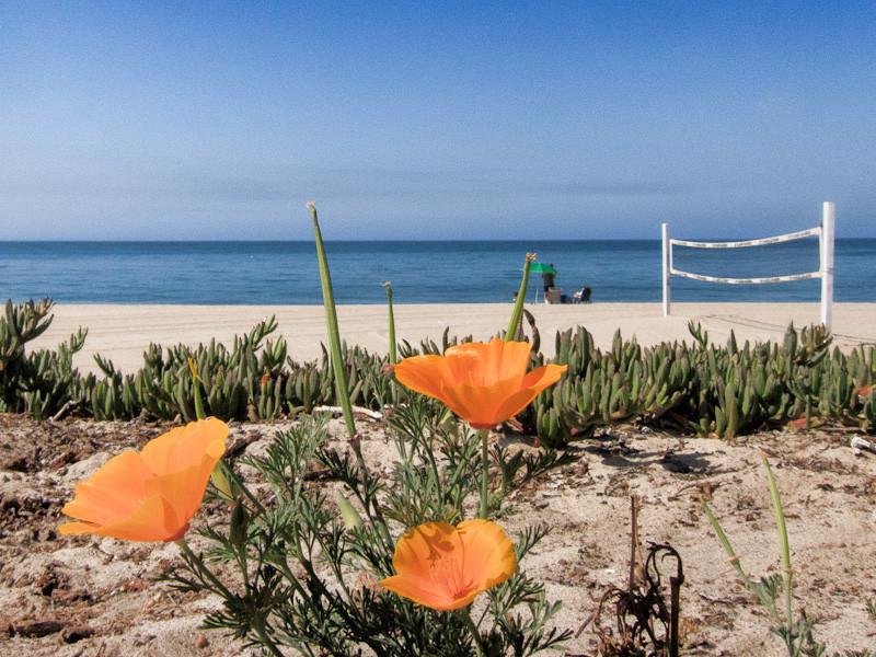 aug 11 - beach.jpg