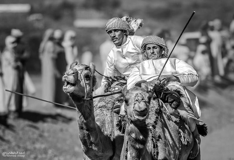 IMGL0217-camels- B&W.jpg