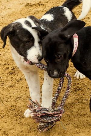 Marys Dogs 05272018