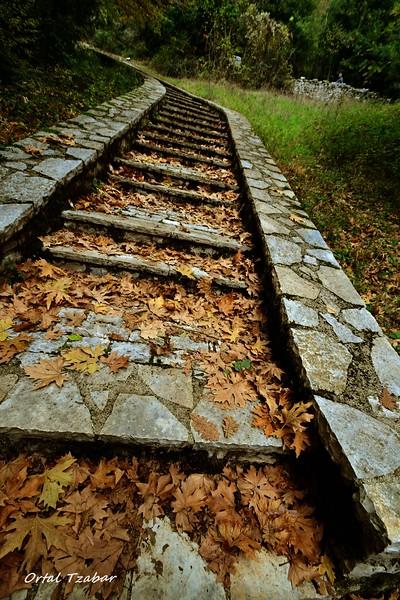 מדרגות ביער.jpg