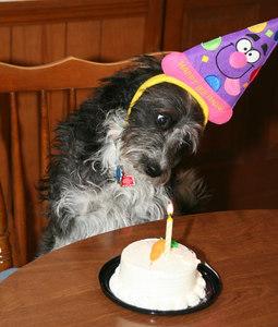 2006 Sophie's 1st Birthday