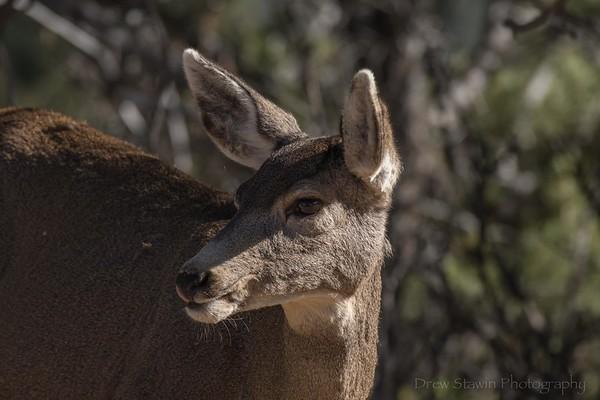 Deer November