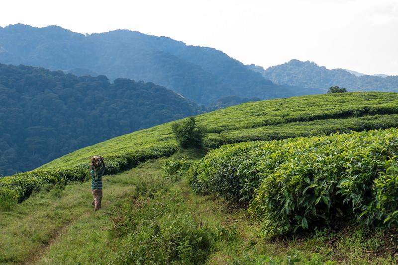 Nyugwe-Rwanda-9.jpg