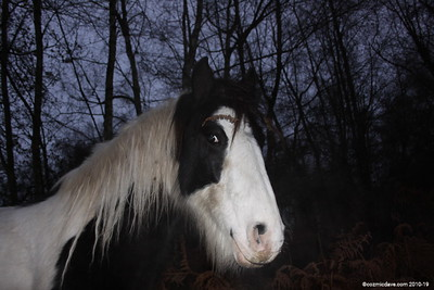Horses - Set 2