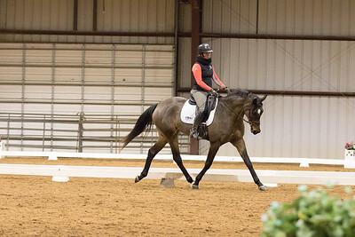 Horse 652