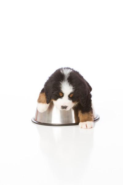2013-Pearson Pups-Jun02-0362.jpg