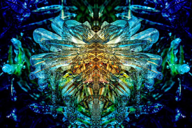 20201014-_DSC4954-Mirror-2-1-Edit-1.jpg