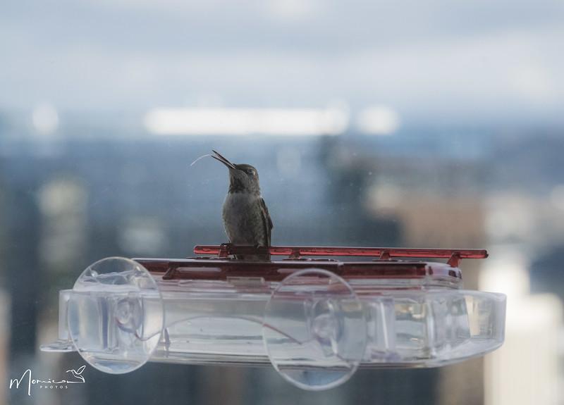 2021 - The Hummingbird Chronicles-1084_edit-2.jpg