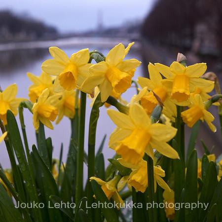 Kevät - Spring