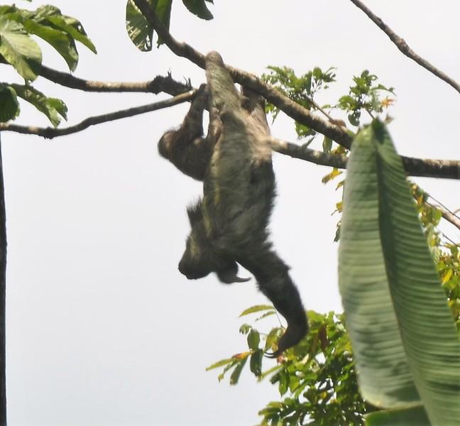 Sloth and baby.jpg