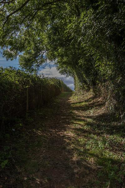 Lane in Devon, UK