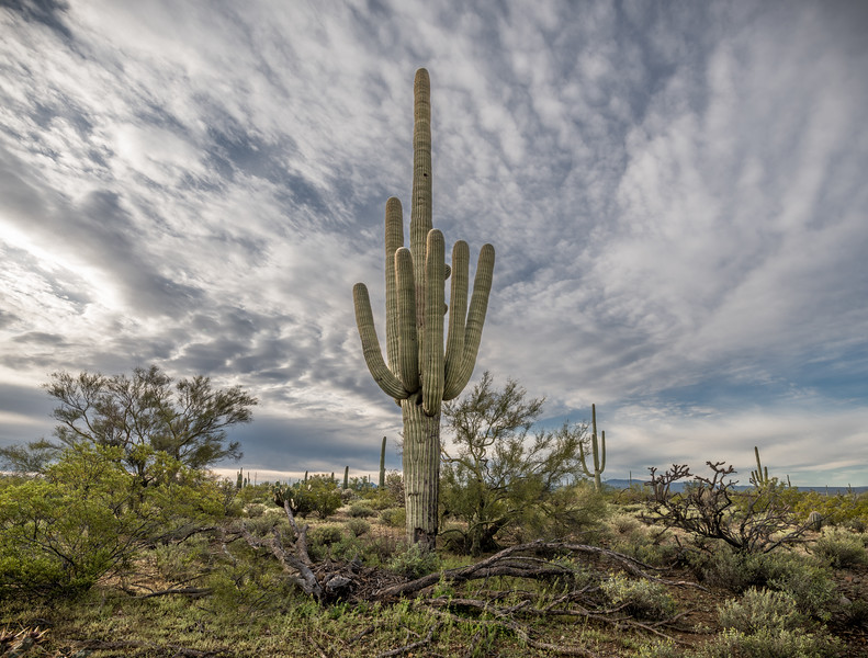 I-11 - Big  Saguaro South of Sinagua Road #2