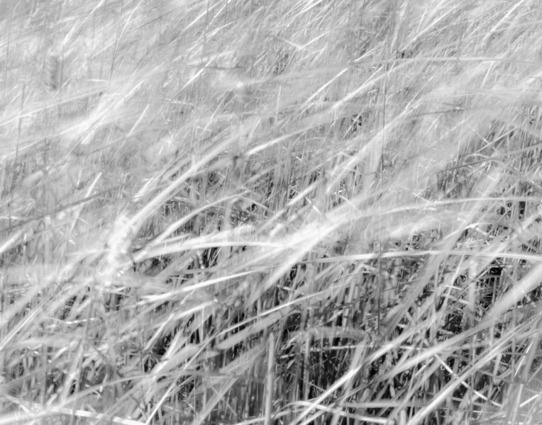 Marsh Wind.jpg