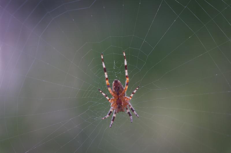 Spider (2010-07-29)
