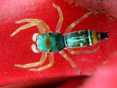 Spiders - order Araneae