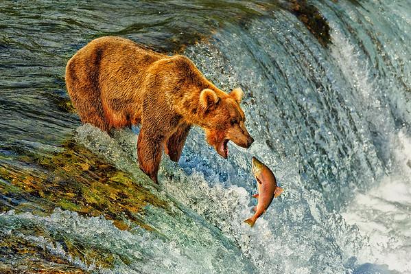 Salmon Fishing Grizzlies
