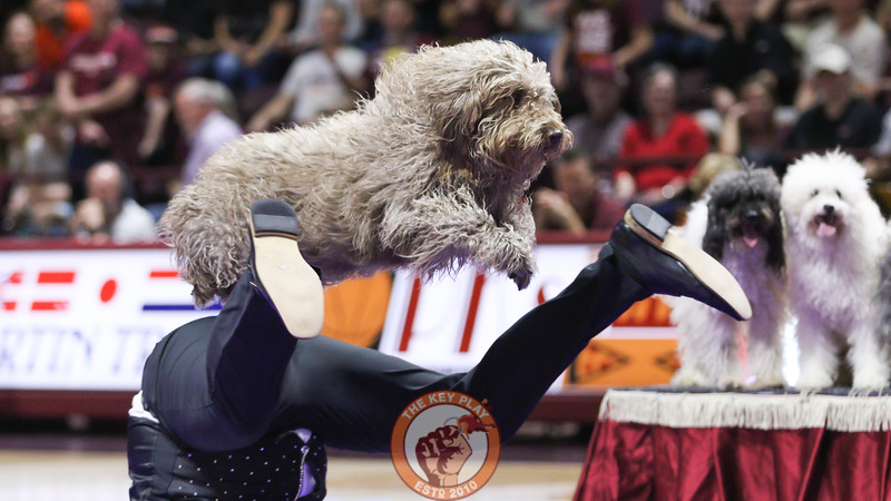 "A dog member of the America's Got Talent show ""Olate"" performs for the crowd during halftime. (Mark Umansky/TheKeyPlay.com)"