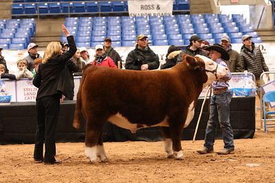 Ringshots - Polled Class 4 through Grand Overall