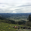 A view to Mt Hood from Hood River Mountain