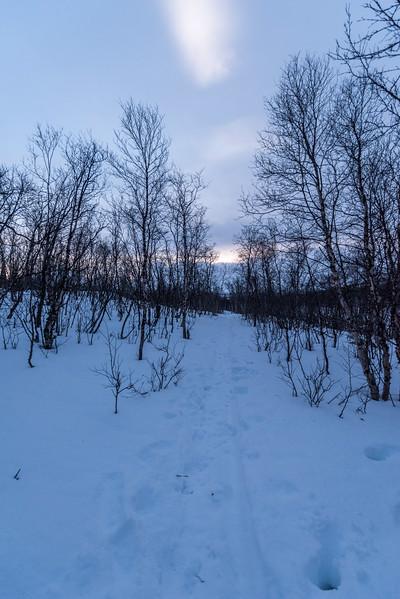 Abisko_December_2016-52.jpg