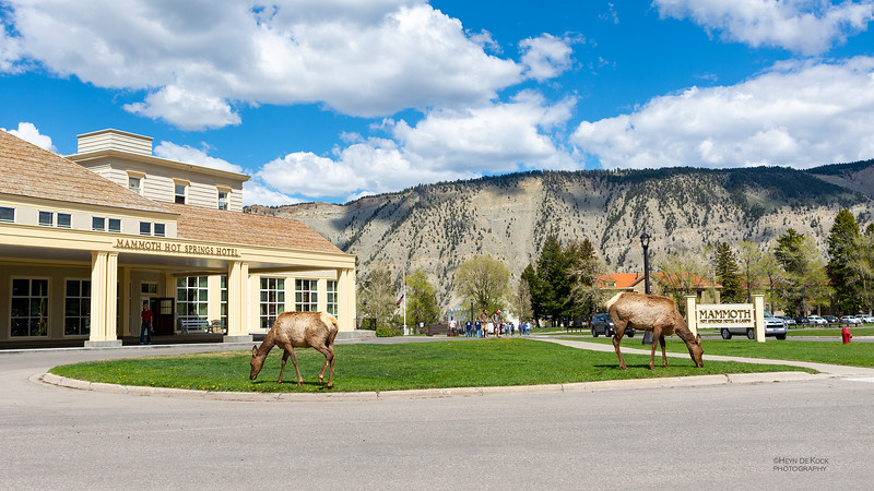 Mammoth Hotel & Elk, Yellowstone NP, WY, USA May 2018-1.jpg