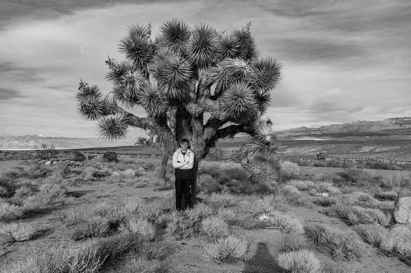 Joshue-Tree-Graham-California.jpg
