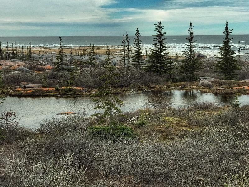 Launch Road taiga pond Hudson Bay Churchill Manitoba Canada Photo Jun 16, 5 04 29 PM.jpg