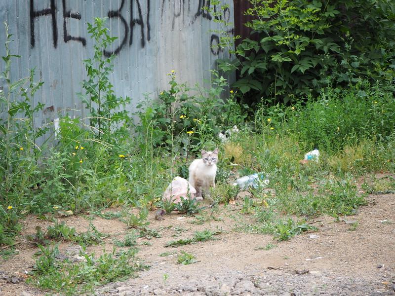 P7210079-feral-cat.JPG