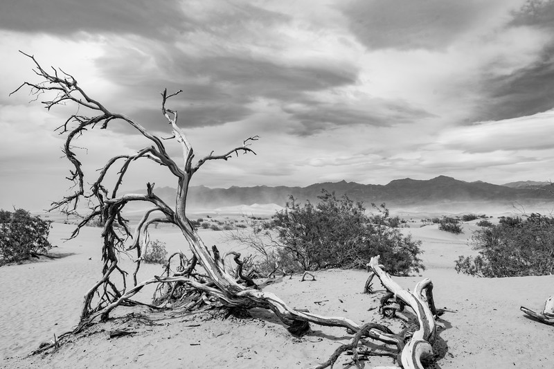 death-valley-dunes-dead-wood-April2017.jpg