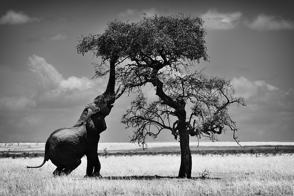 Africa - Black and White