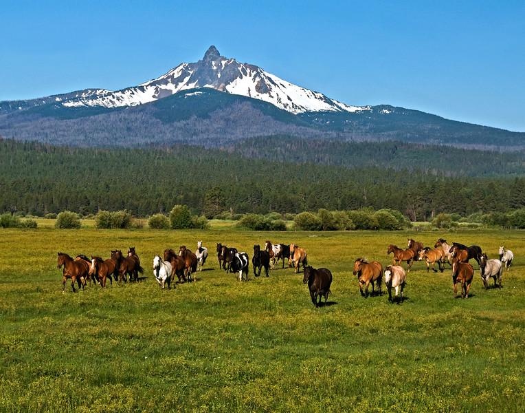 Horses running -on their way to work Mt Washington Kate Thomas Keown_DSC6041-11x14.jpg