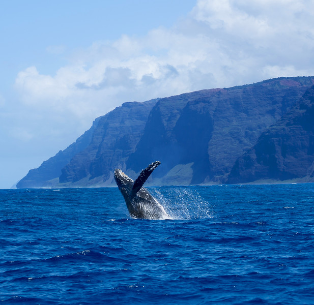 whale-leila-print.jpg