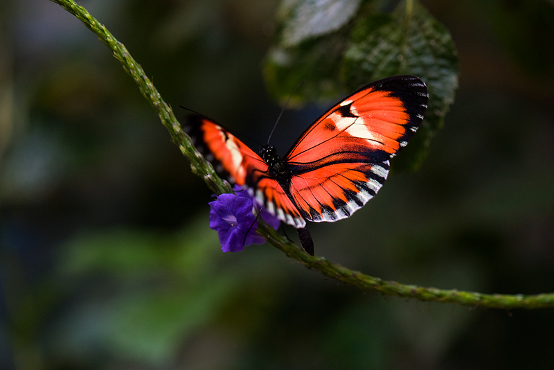 Butterfly 23.jpg