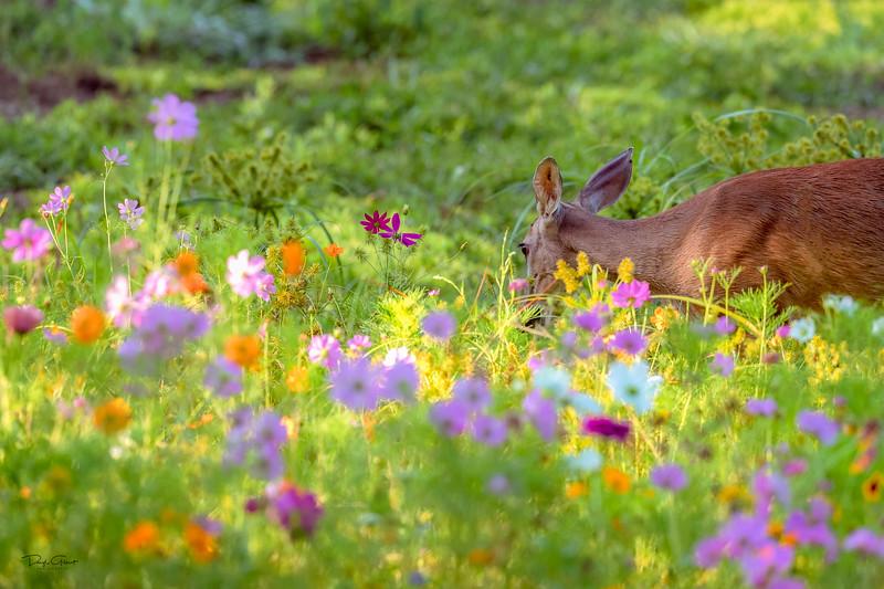 """""""Wildflower Camouflage"""""""