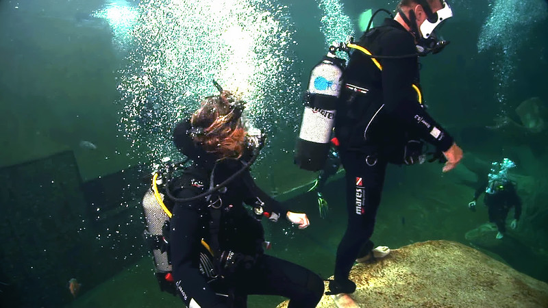 Underwater Walk Edit 45secs.00_00_35_21.Still042.jpg