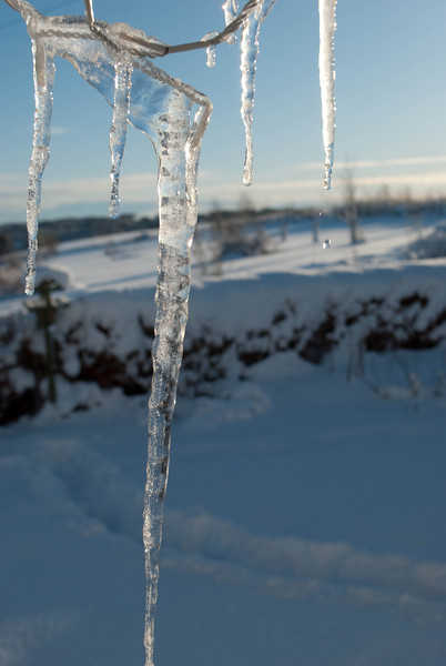 Icicles (3 of 5)