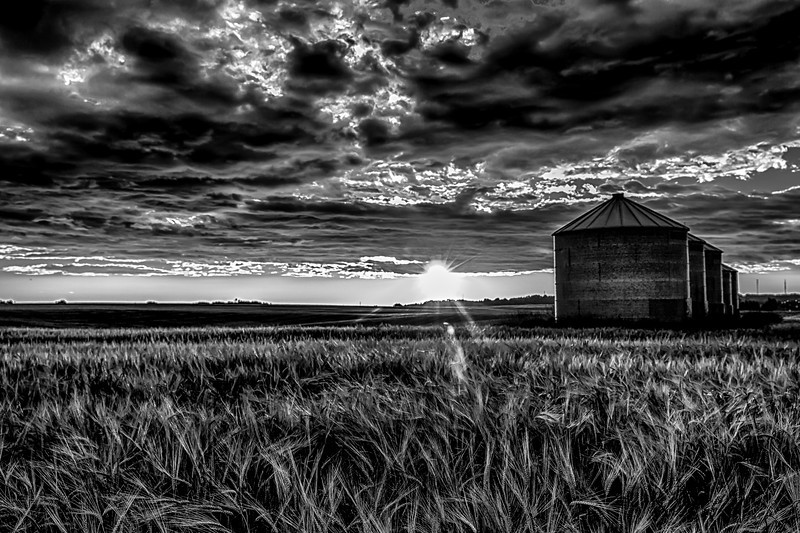 Wheatfield Sunrise in Black and White