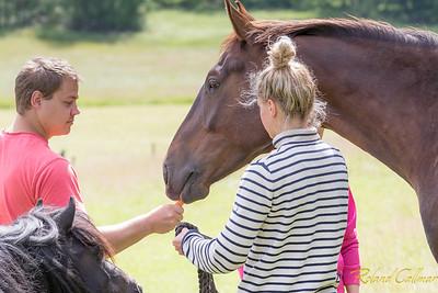 Stinas häst 2015