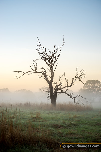 Fog Tendrils