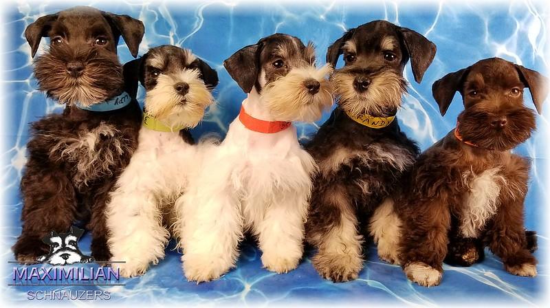 Brandi Pups 046.jpg