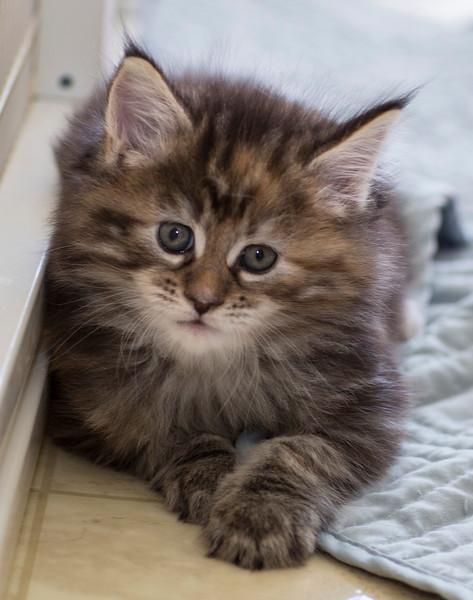 Kittens245.jpg